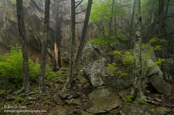 Spring forest and canyon walls, Whiteoak Canyon, Shenandoah Nati