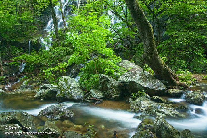 Spring flow, Whiteoak Canyon, Shenandoah National Park, Virginia